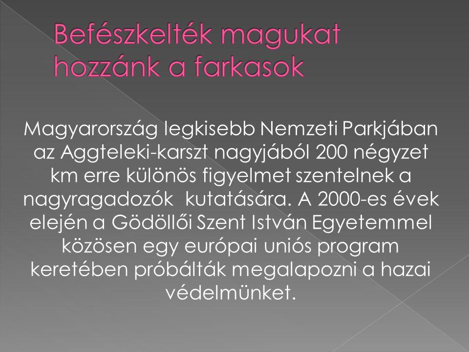 Magyarország legkisebb Nemzeti Parkjában az Aggteleki-karszt nagyjából 200 négyzet km erre különös figyelmet szentelnek a nagyragadozók kutatására.