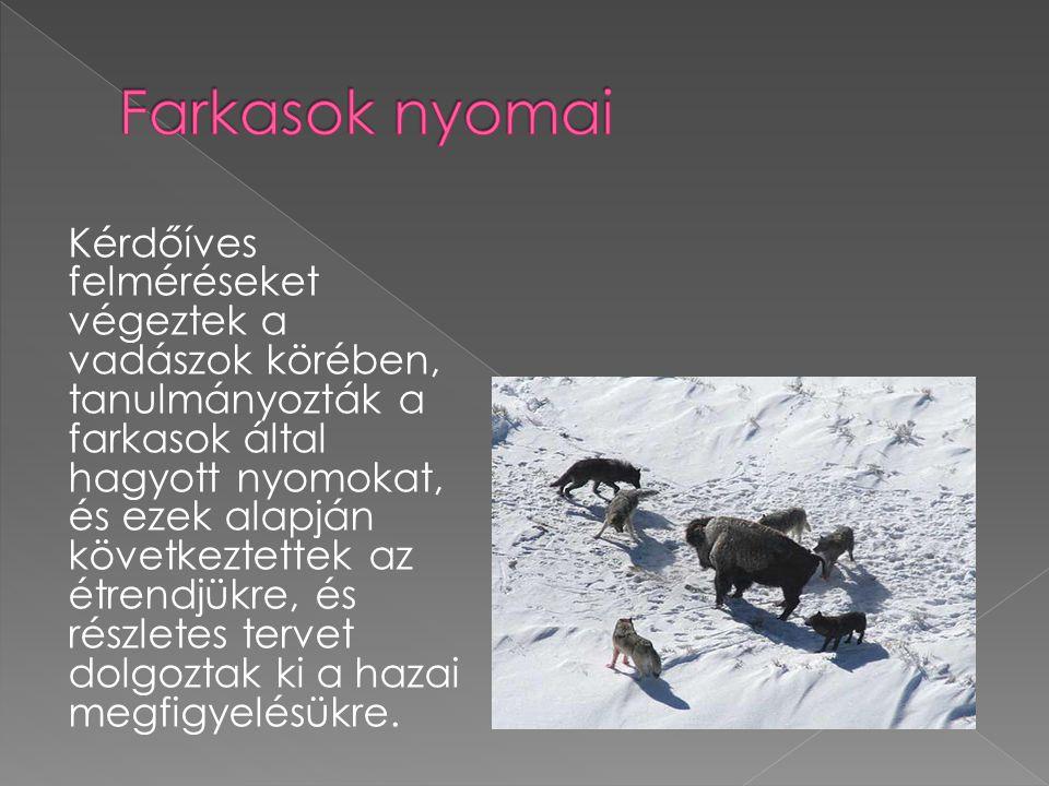 Kérdőíves felméréseket végeztek a vadászok körében, tanulmányozták a farkasok által hagyott nyomokat, és ezek alapján következtettek az étrendjükre, és részletes tervet dolgoztak ki a hazai megfigyelésükre.