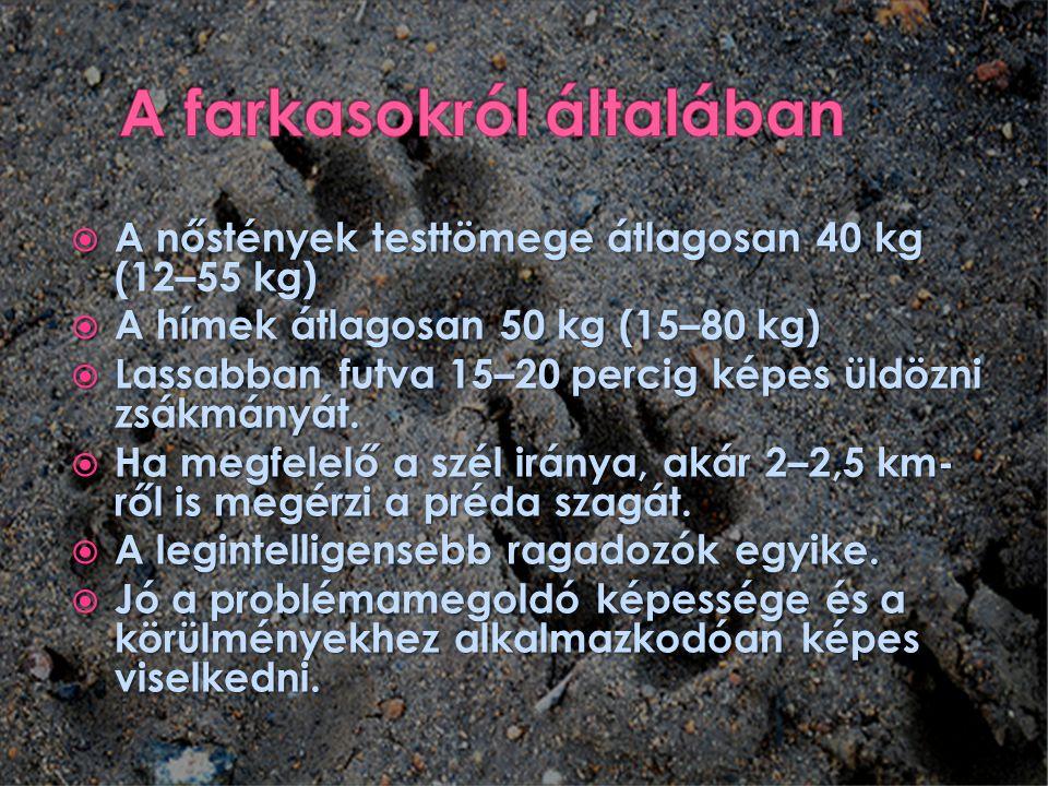  A nőstények testtömege átlagosan 40 kg (  A nőstények testtömege átlagosan 40 kg (12–55 kg)  A hímek átlagosan 50 kg (15–80 kg)  Lassabban futva 15–20 percig képes üldözni zsákmányát.