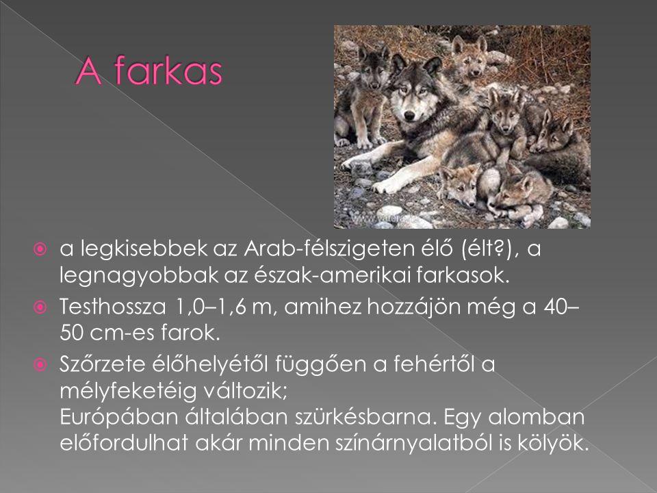  a legkisebbek az Arab-félszigeten élő (élt?), a legnagyobbak az észak-amerikai farkasok.