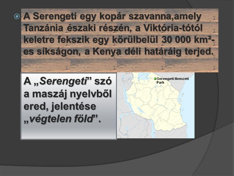  A Serengeti egy kopár szavanna,amely Tanzánia északi részén, a Viktória-tótól keletre fekszik egy körülbelül 30 000 km²- es síkságon, a Kenya déli h