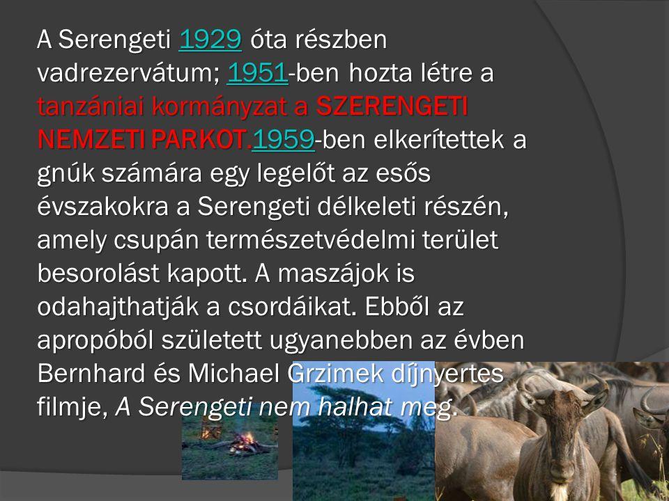 A Serengeti 1929 óta részben vadrezervátum; 1951-ben hozta létre a tanzániai kormányzat a SZERENGETI NEMZETI PARKOT.1959-ben elkerítettek a gnúk számá
