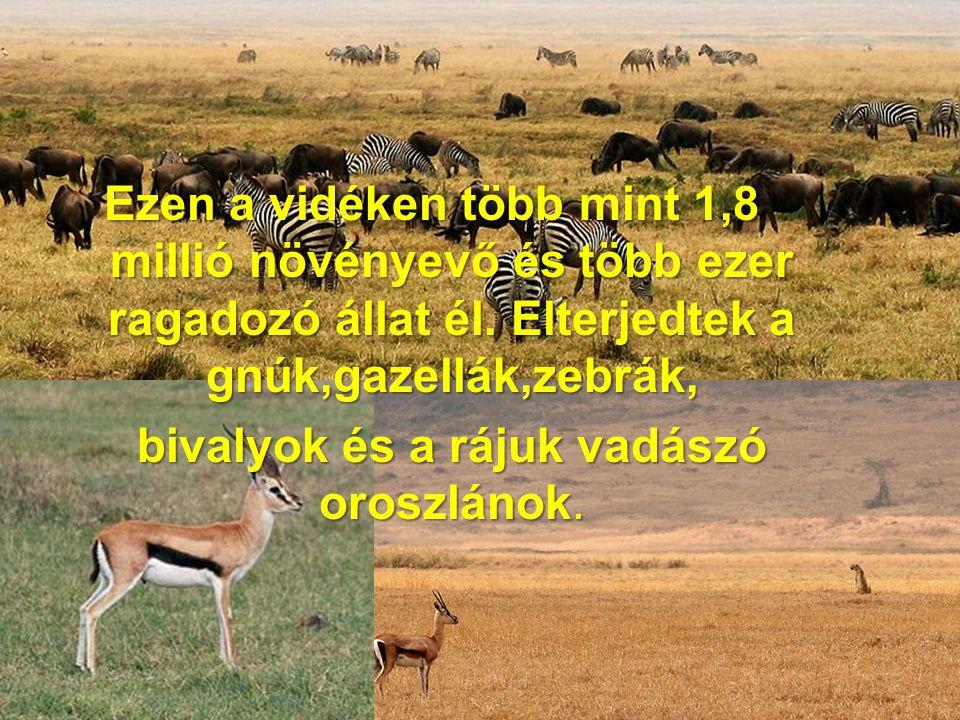 Ezen a vidéken több mint 1,8 millió növényevő és több ezer ragadozó állat él. Elterjedtek a gnúk,gazellák,zebrák, bivalyok és a rájuk vadászó oroszlán