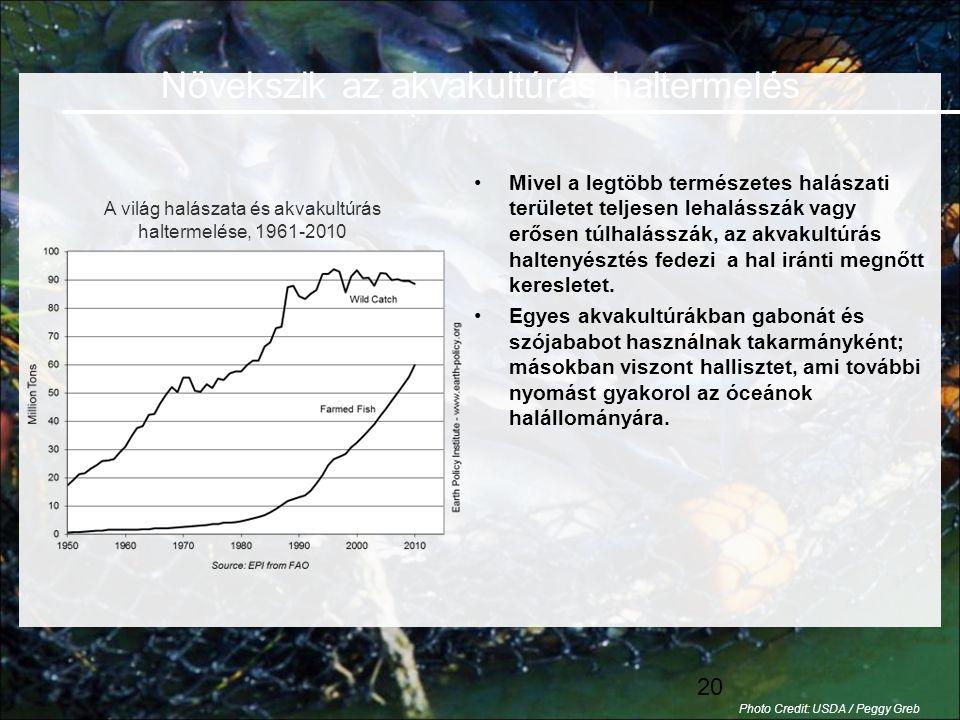 20 •Mivel a legtöbb természetes halászati területet teljesen lehalásszák vagy erősen túlhalásszák, az akvakultúrás haltenyésztés fedezi a hal iránti megnőtt keresletet.