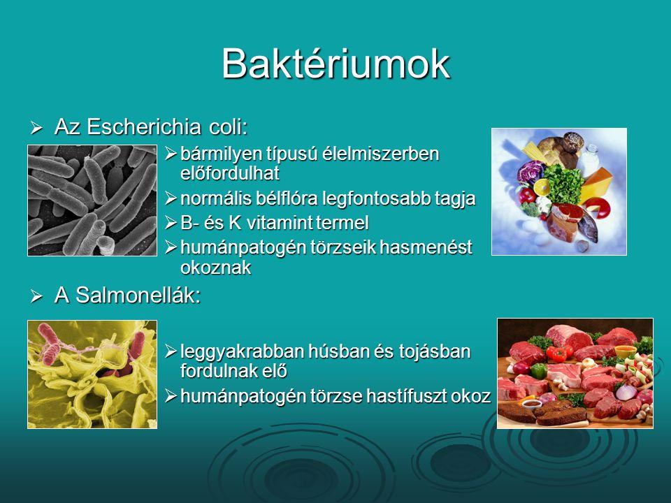 Baktériumok  Az Escherichia coli:  bármilyen típusú élelmiszerben előfordulhat  normális bélflóra legfontosabb tagja  B- és K vitamint termel  hu
