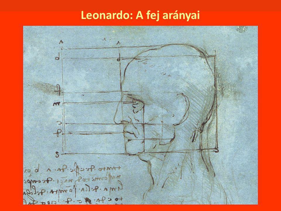 Leonardo: A fej arányai