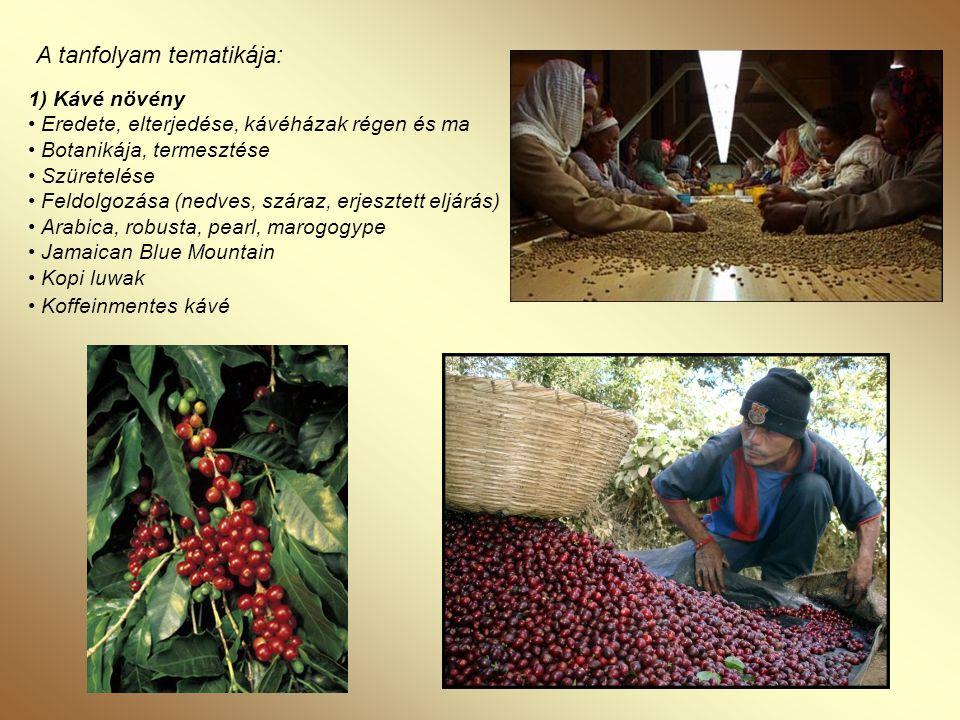 2) A kávé forgalmazása • A kávétőzsde • Kávé keverékek