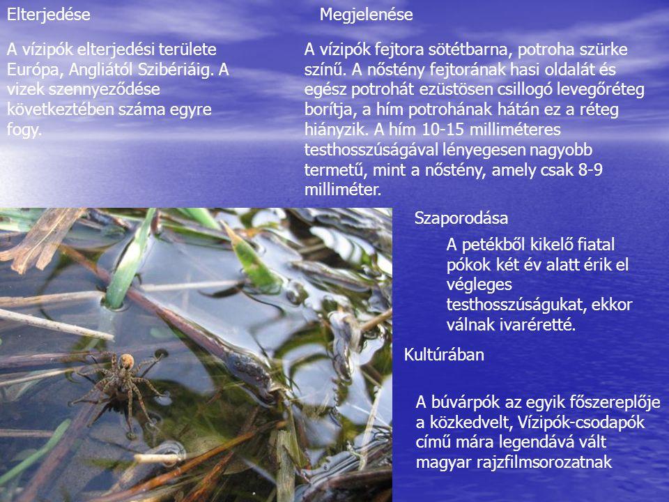 A vízipók elterjedési területe Európa, Angliától Szibériáig.