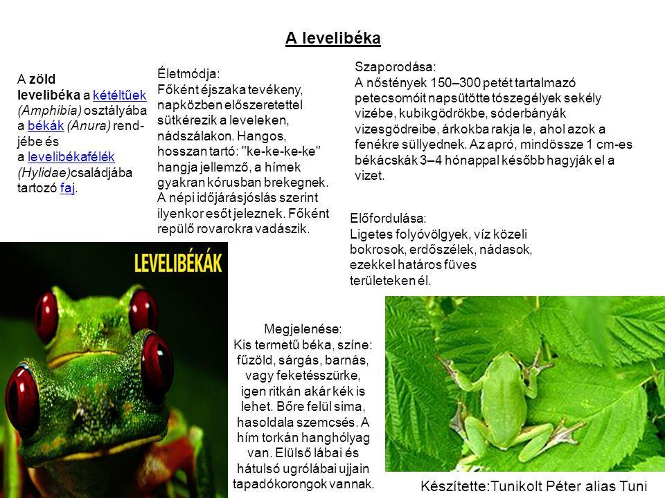 A levelibéka A zöld levelibéka a kétéltűek (Amphibia) osztályába a békák (Anura) rend- jébe és a levelibékafélék kétéltűekbékáklevelibékafélék (Hylidae)családjába tartozó faj.faj Megjelenése: Kis termetű béka, színe: fűzöld, sárgás, barnás, vagy feketésszürke, igen ritkán akár kék is lehet.