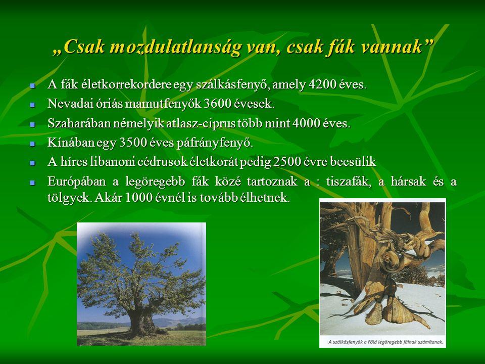 """""""Csak mozdulatlanság van, csak fák vannak""""  A fák életkorrekordere egy szálkásfenyő, amely 4200 éves.  Nevadai óriás mamutfenyők 3600 évesek.  Szah"""