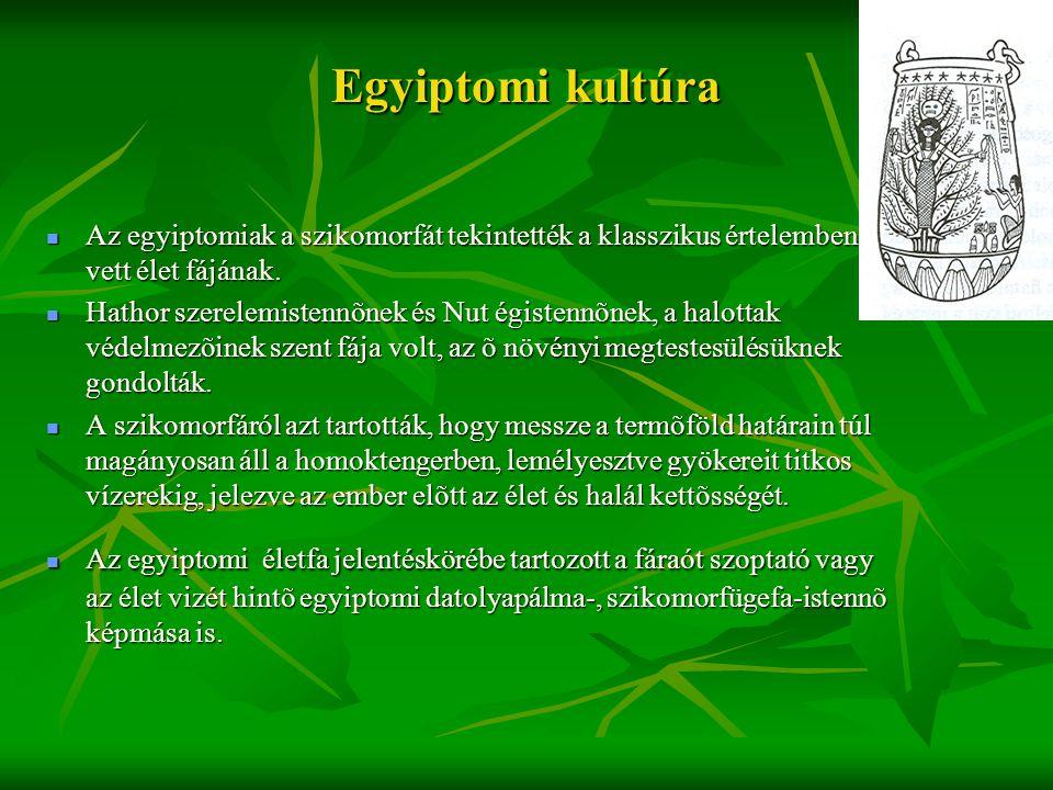 Egyiptomi kultúra  Az egyiptomiak a szikomorfát tekintették a klasszikus értelemben vett élet fájának.  Hathor szerelemistennõnek és Nut égistennõne