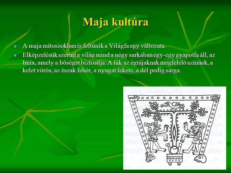 Maja kultúra  A maja mítoszokban is feltûnik a Világfa egy változata.  Elképzelésük szerint a világ mind a négy sarkában egy-egy gyapotfa áll, az Im