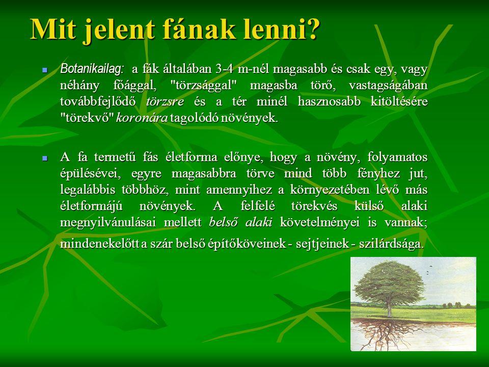 Mit jelent fának lenni?  Botanikailag: a fák általában 3-4 m-nél magasabb és csak egy, vagy néhány főággal,