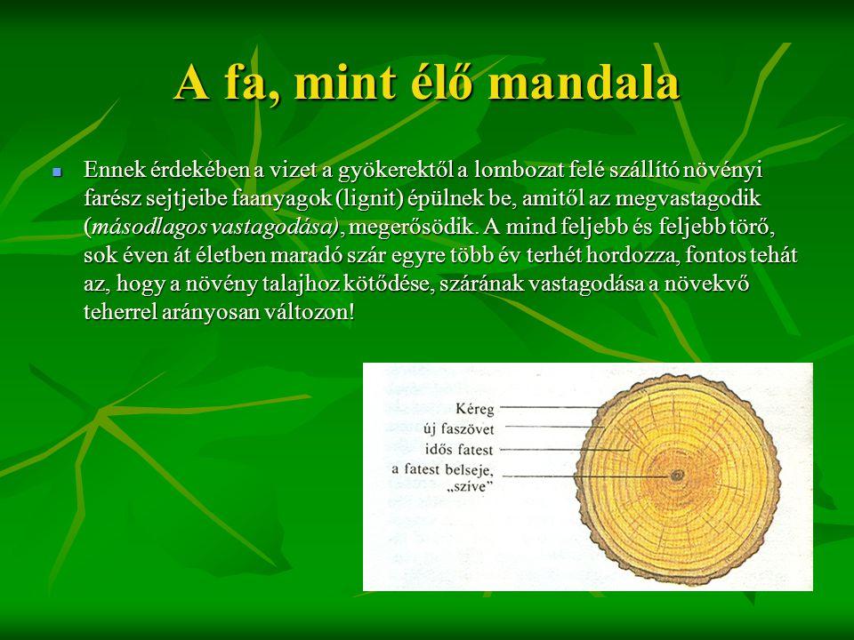 A fa, mint élő mandala  Ennek érdekében a vizet a gyökerektől a lombozat felé szállító növényi farész sejtjeibe faanyagok (lignit) épülnek be, amitől