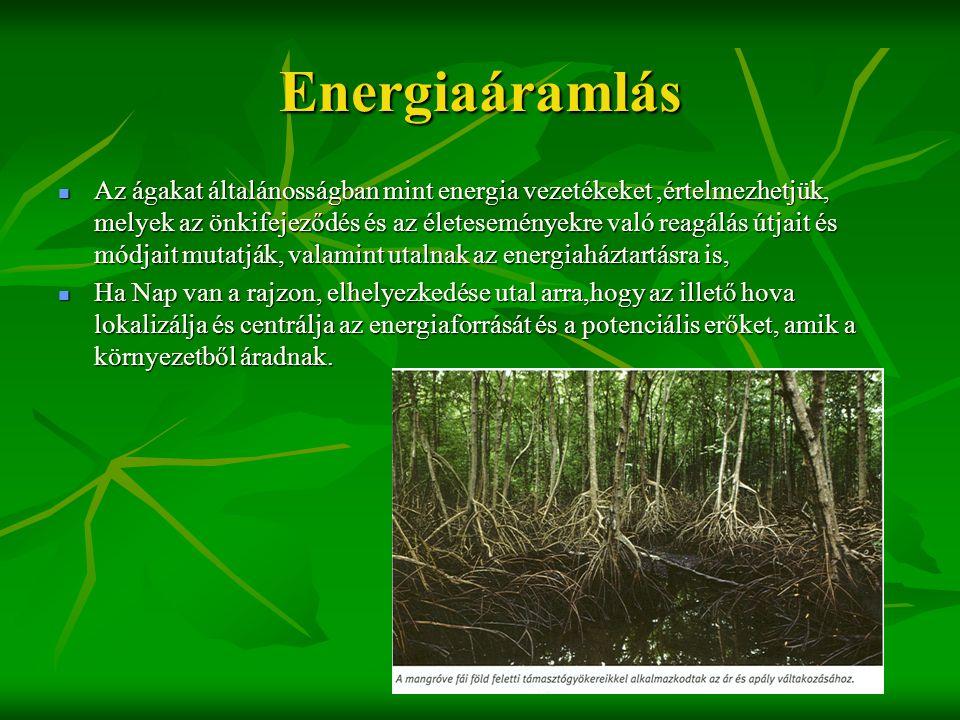 Energiaáramlás  Az ágakat általánosságban mint energia vezetékeket,értelmezhetjük, melyek az önkifejeződés és az életeseményekre való reagálás útjait
