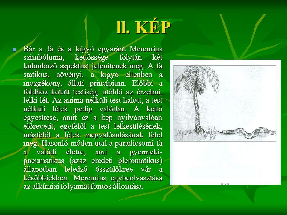 ll. KÉP  Bár a fa és a kígyó egyaránt Mercurius szimbóluma, kettőssége folytán két különböző aspektust jelenítenek meg. A fa statikus, növényi, a kíg