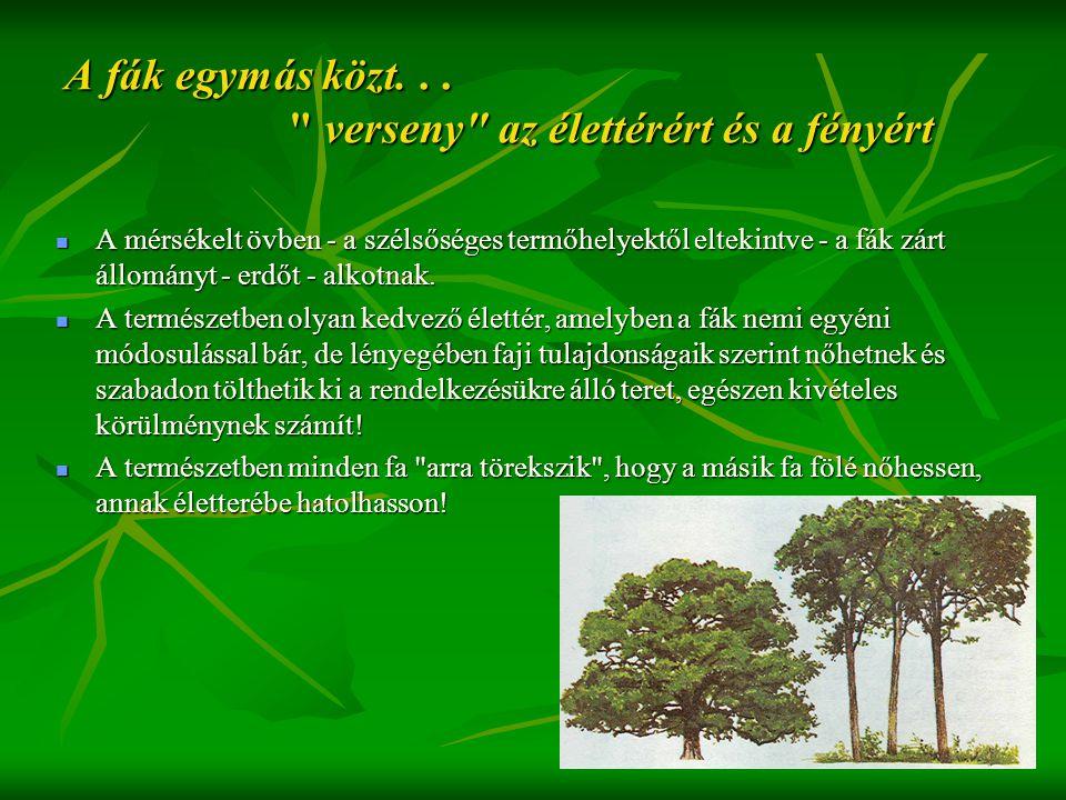 A fák egymás közt...