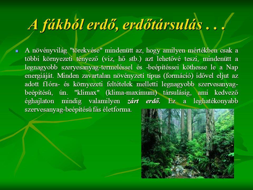 A fákból erdő, erdőtársulás...  A növényvilág