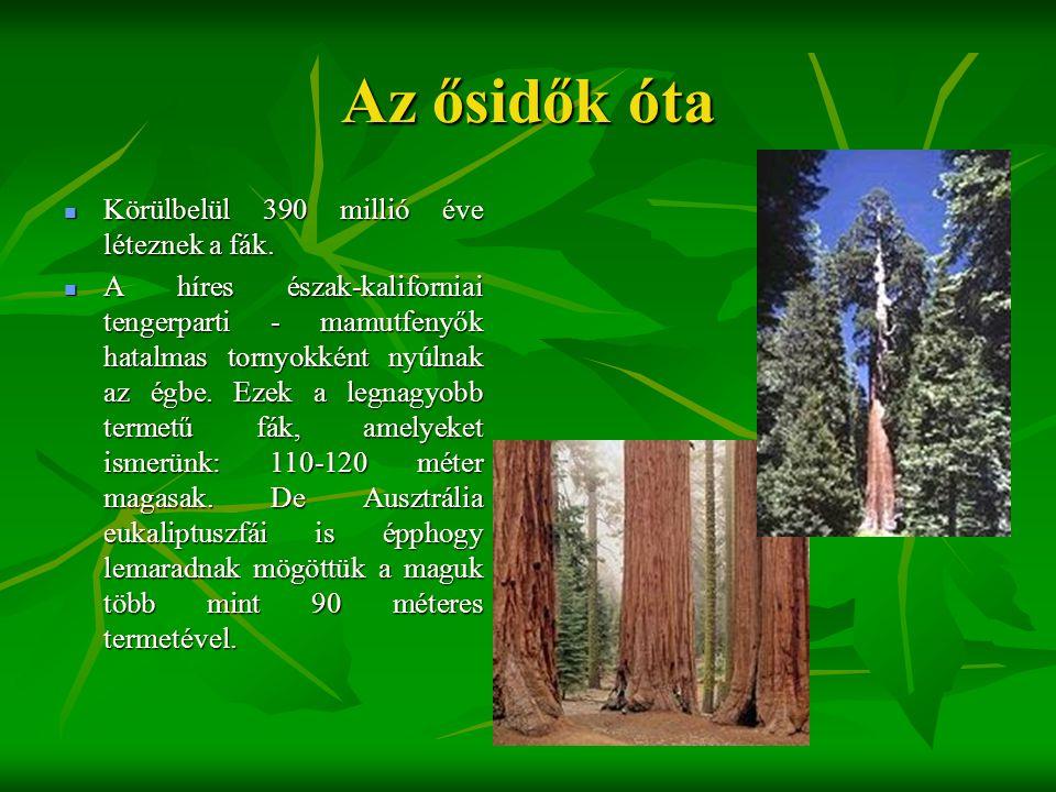 Az ősidők óta  Körülbelül 390 millió éve léteznek a fák.  A híres észak-kaliforniai tengerparti - mamutfenyők hatalmas tornyokként nyúlnak az égbe.
