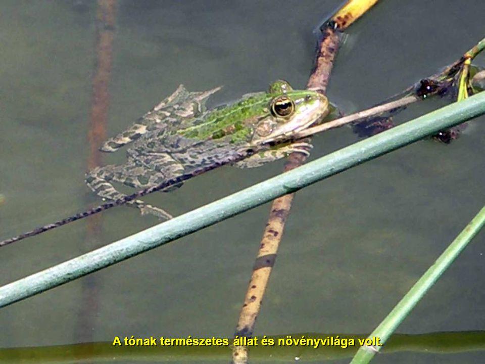 A tónak természetes állat és növényvilága volt.