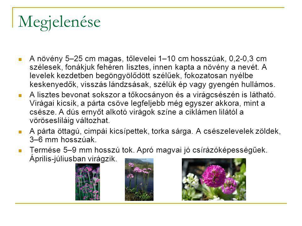 Egyhajúvirág  Az egyhajúvirág a liliomvirágúak rendjében a kikericsfélék családjának monotipikus nemzetsége.