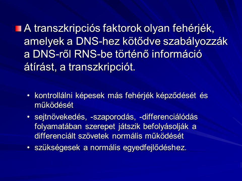 A transzkripciós faktorok olyan fehérjék, amelyek a DNS-hez kötődve szabályozzák a DNS-ről RNS-be történő információ átírást, a transzkripciót. •kontr