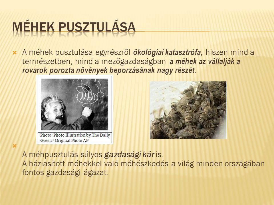L. Dóri: Mézbolt F. Dávid: Méhészek H. Lackó rajza a füzetben A. Tekla rajza a füzetében