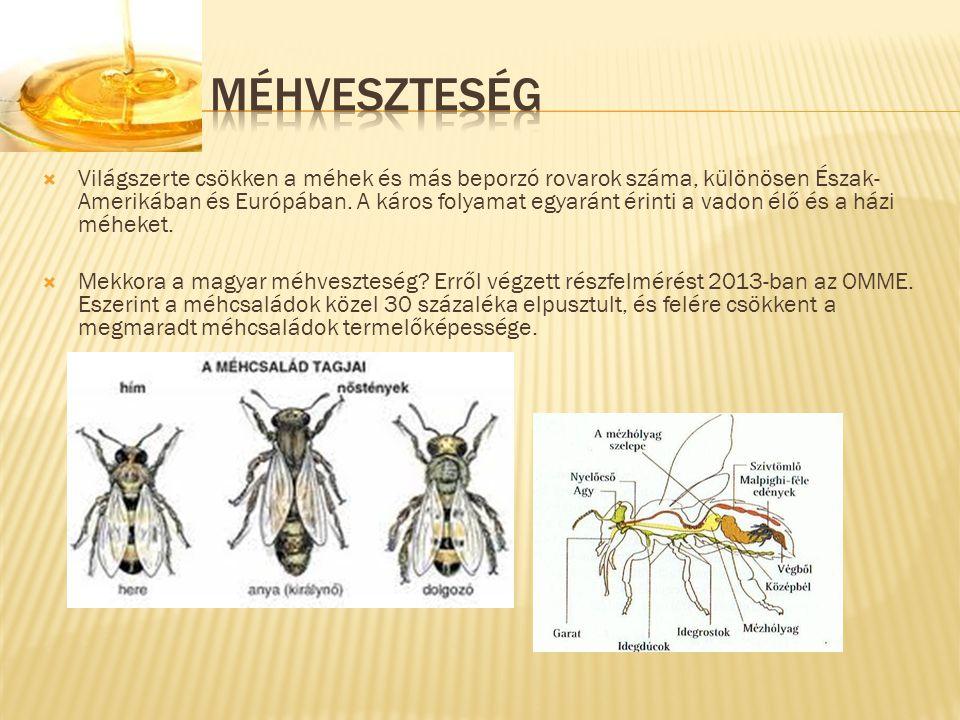  Világszerte csökken a méhek és más beporzó rovarok száma, különösen Észak- Amerikában és Európában. A káros folyamat egyaránt érinti a vadon élő és