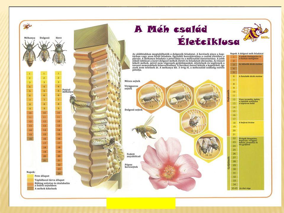  Az újfajta (neonikotinoid)növényvédő szerek is felelőssé tehetők érte.