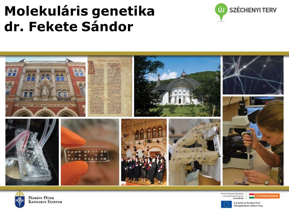 Molekuláris genetika dr. Fekete Sándor