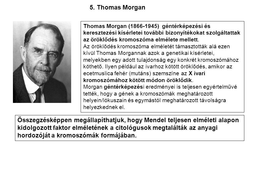 Thomas Morgan (1866-1945) géntérképezési és keresztezési kísérletei további bizonyítékokat szolgáltattak az öröklődés kromoszóma elmélete mellett. Az