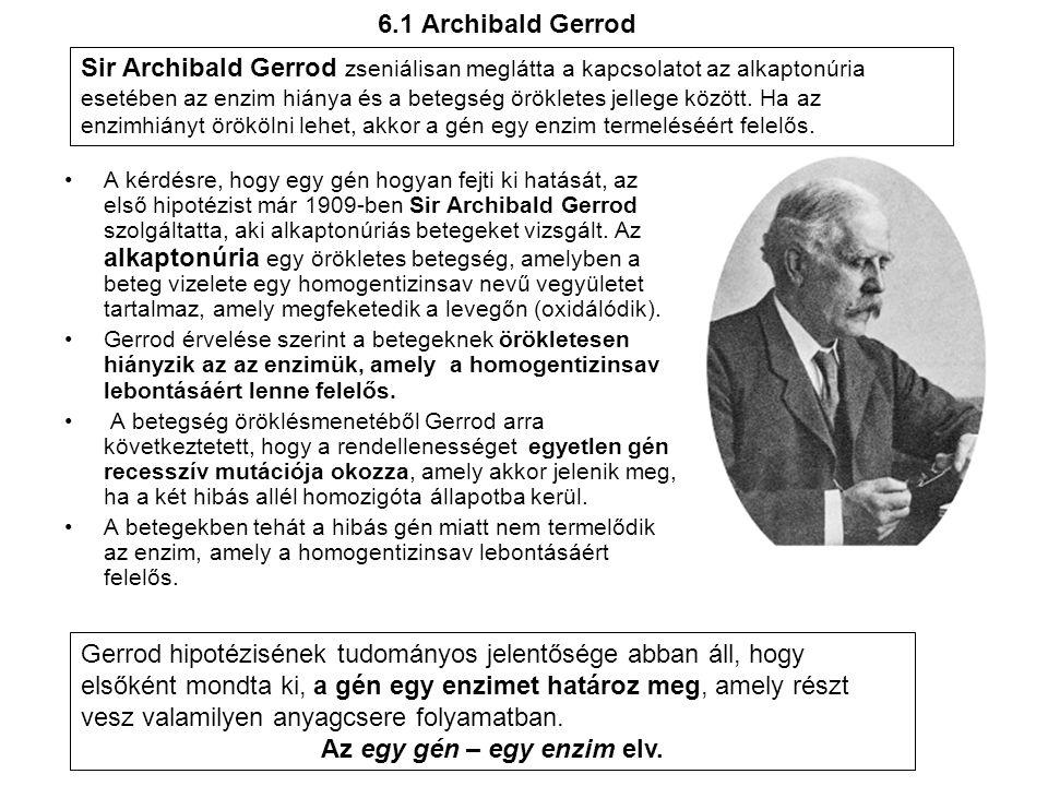 6.1 Archibald Gerrod •A kérdésre, hogy egy gén hogyan fejti ki hatását, az első hipotézist már 1909-ben Sir Archibald Gerrod szolgáltatta, aki alkapto