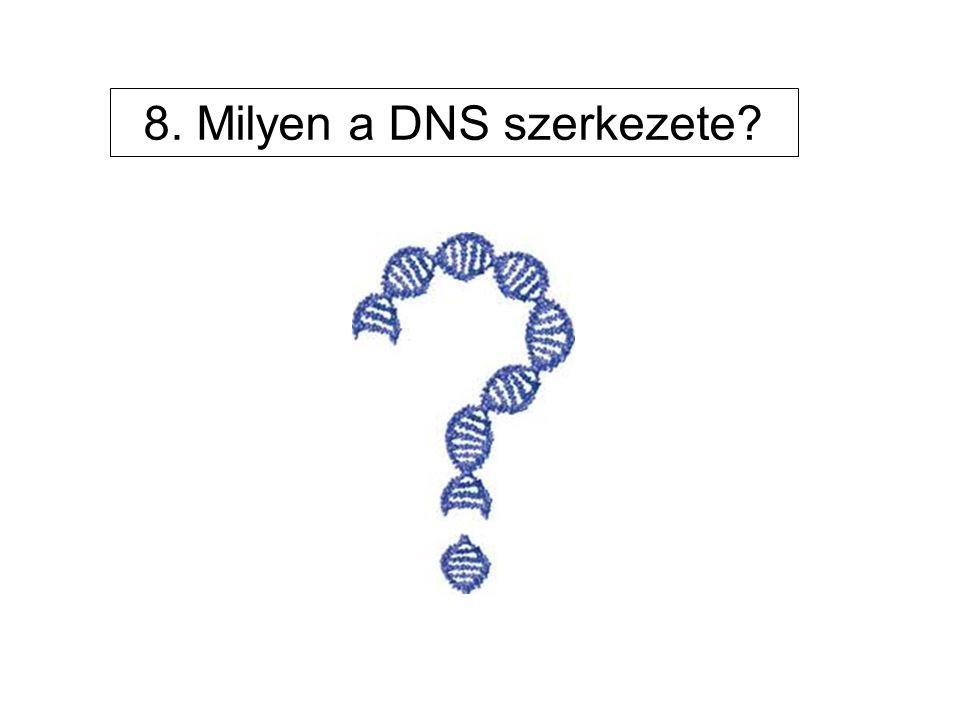 8. Milyen a DNS szerkezete?