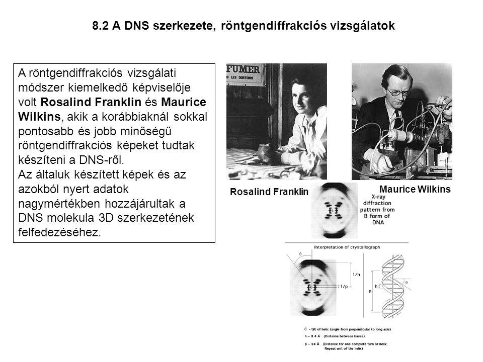 8.2 A DNS szerkezete, röntgendiffrakciós vizsgálatok A röntgendiffrakciós vizsgálati módszer kiemelkedő képviselője volt Rosalind Franklin és Maurice
