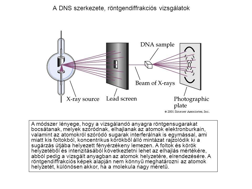 A DNS szerkezete, röntgendiffrakciós vizsgálatok A módszer lényege, hogy a vizsgálandó anyagra röntgensugarakat bocsátanak, melyek szóródnak, elhajlan