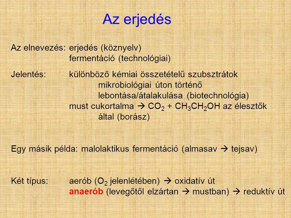 Az erjedés Az elnevezés:erjedés (köznyelv) fermentáció (technológiai) Jelentés:különböző kémiai összetételű szubsztrátok mikrobiológiai úton történő lebontása/átalakulása (biotechnológia) must cukortalma  CO 2 + CH 3 CH 2 OH az élesztők által (borász) Egy másik példa: malolaktikus fermentáció (almasav  tejsav) Két típus:aerób (O 2 jelenlétében)  oxidatív út anaerób (levegőtől elzártan  mustban)  reduktív út
