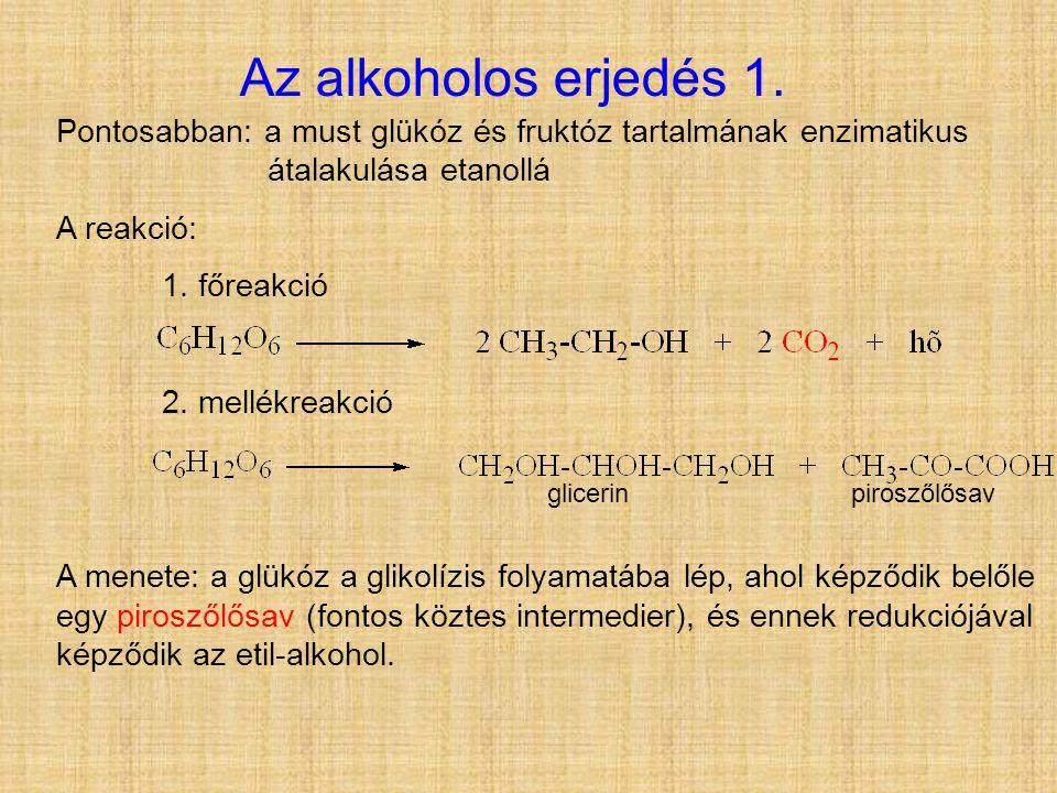 Pontosabban: a must glükóz és fruktóz tartalmának enzimatikus átalakulása etanollá A reakció: 1. főreakció 2. mellékreakció A menete: a glükóz a gliko