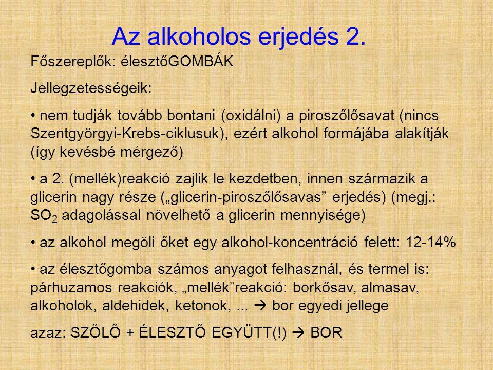 Az alkoholos erjedés 2. Főszereplők: élesztőGOMBÁK Jellegzetességeik: • nem tudják tovább bontani (oxidálni) a piroszőlősavat (nincs Szentgyörgyi-Kreb