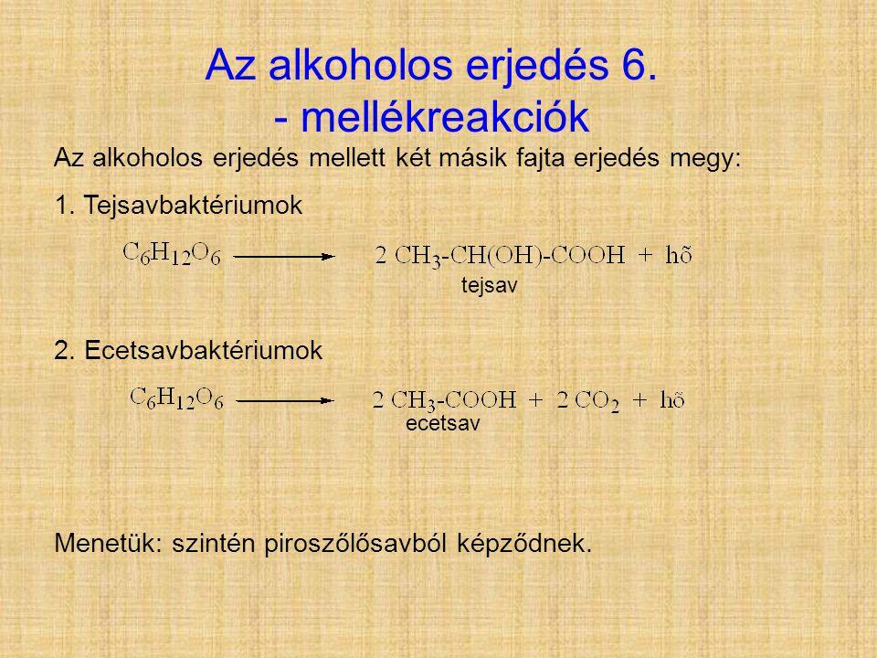 Az alkoholos erjedés 6. - mellékreakciók Az alkoholos erjedés mellett két másik fajta erjedés megy: 1. Tejsavbaktériumok 2. Ecetsavbaktériumok Menetük