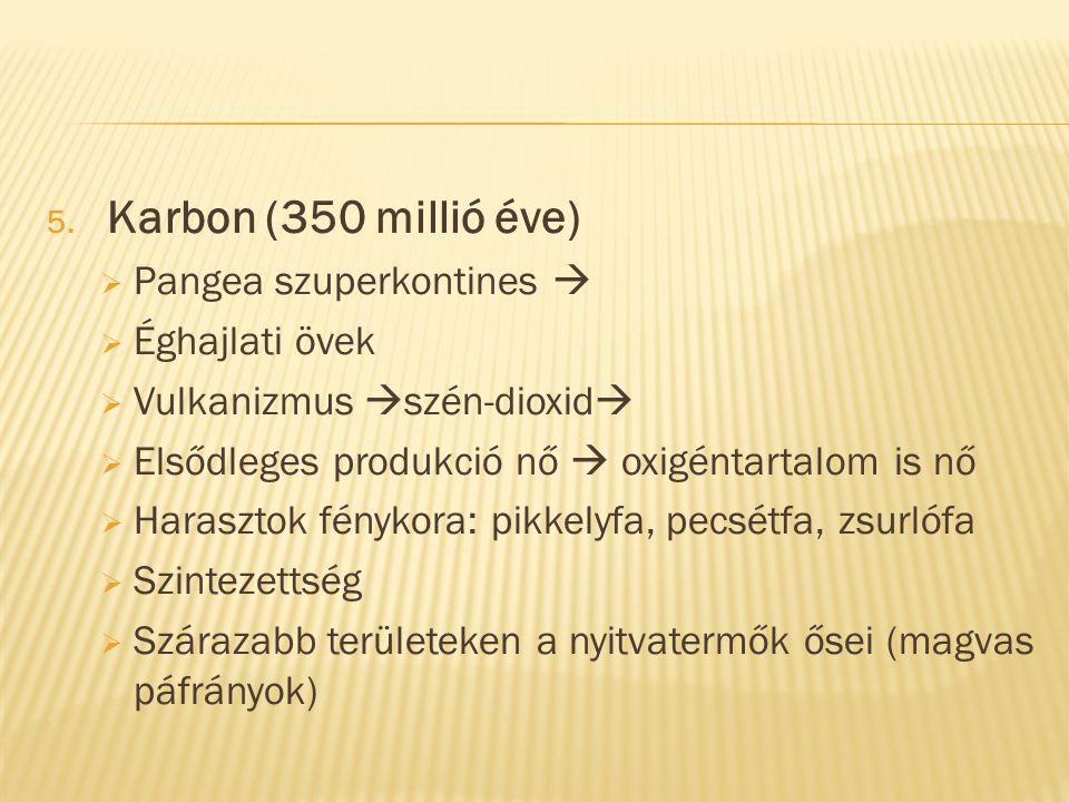 5. Karbon (350 millió éve)  Pangea szuperkontines   Éghajlati övek  Vulkanizmus  szén-dioxid   Elsődleges produkció nő  oxigéntartalom is nő 