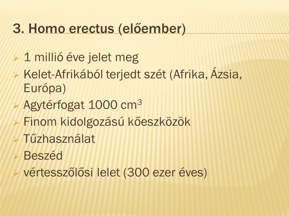 3. Homo erectus (előember)  1 millió éve jelet meg  Kelet-Afrikából terjedt szét (Afrika, Ázsia, Európa)  Agytérfogat 1000 cm 3  Finom kidolgozású