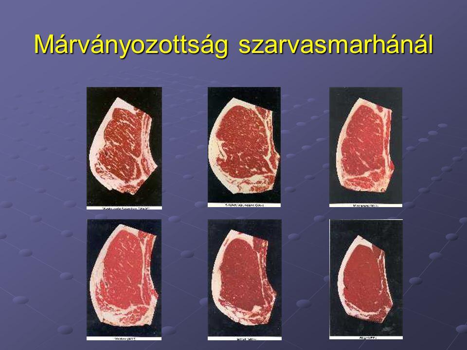 •Elektromos kábítás - Gyorsabb kezdeti pH esés, végső pH-t befolyásolja - Növeli a PSE húshiba arányát - Törések, bevérzések, növekednek •Széndioxidos kábítás - Állatvédelmi aggályok - Kevesebb PSE hús, csonttörés, bevérzések Húsminőséget befolyásoló tényezők VII.