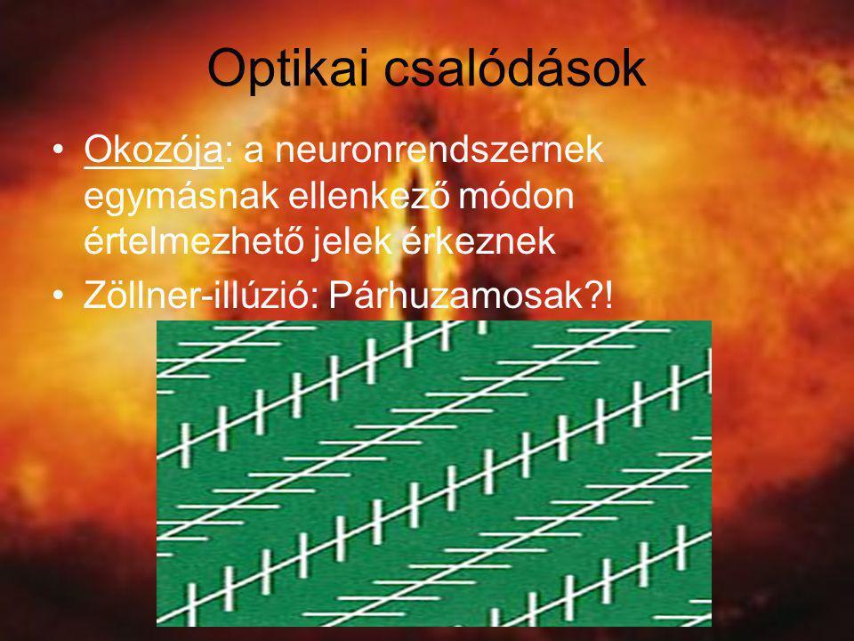 Optikai csalódások •Okozója: a neuronrendszernek egymásnak ellenkező módon értelmezhető jelek érkeznek •Zöllner-illúzió: Párhuzamosak?!