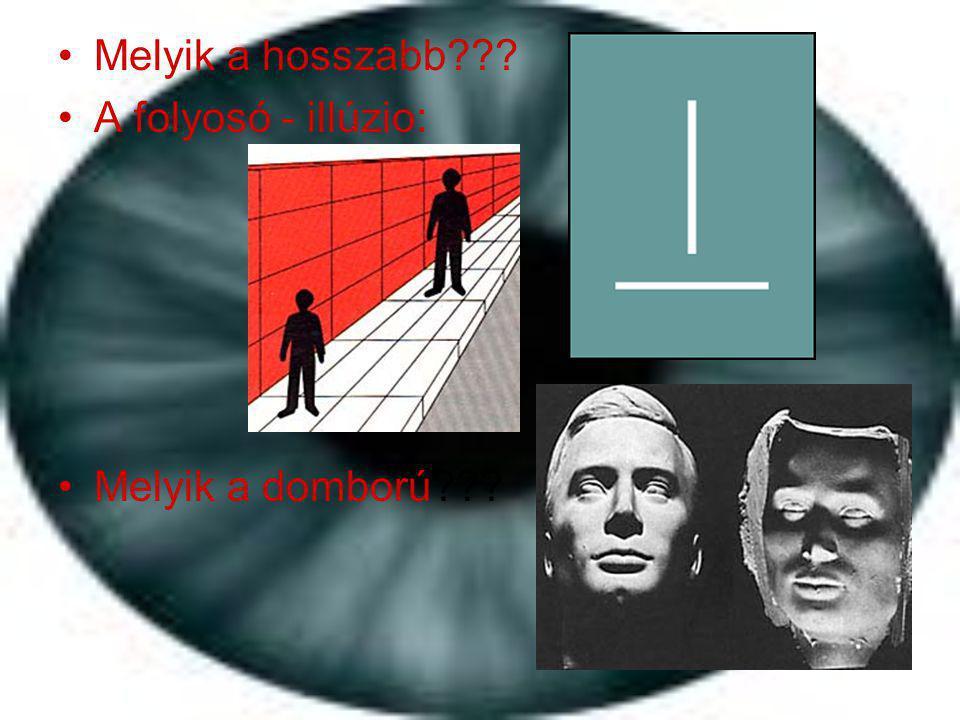 •Melyik a hosszabb??? •A folyosó - illúzio: •Melyik a domború???