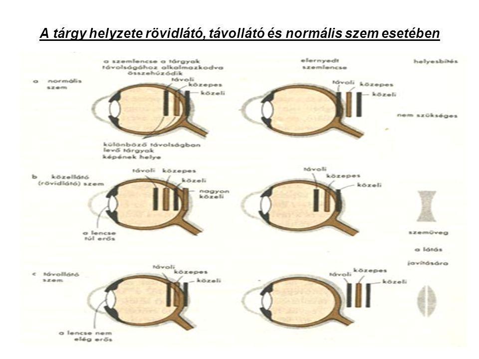Színérzékeléshez szükségesek •Pálcikák (legérzékenyebbek) •Csapok (színesen érzékelik a fényt) •Csap = receptor – 3 fajta: vörös,kék,zöld A háromfajta receptor érzékenysége a különböző hullámhosszakra