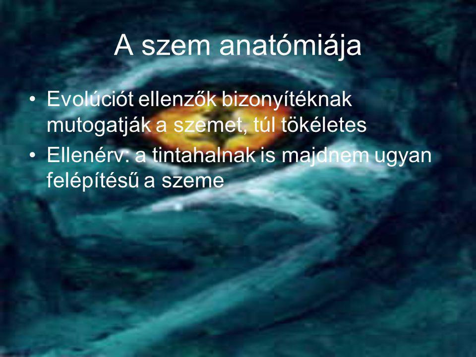 A szem anatómiája •Evolúciót ellenzők bizonyítéknak mutogatják a szemet, túl tökéletes •Ellenérv: a tintahalnak is majdnem ugyan felépítésű a szeme