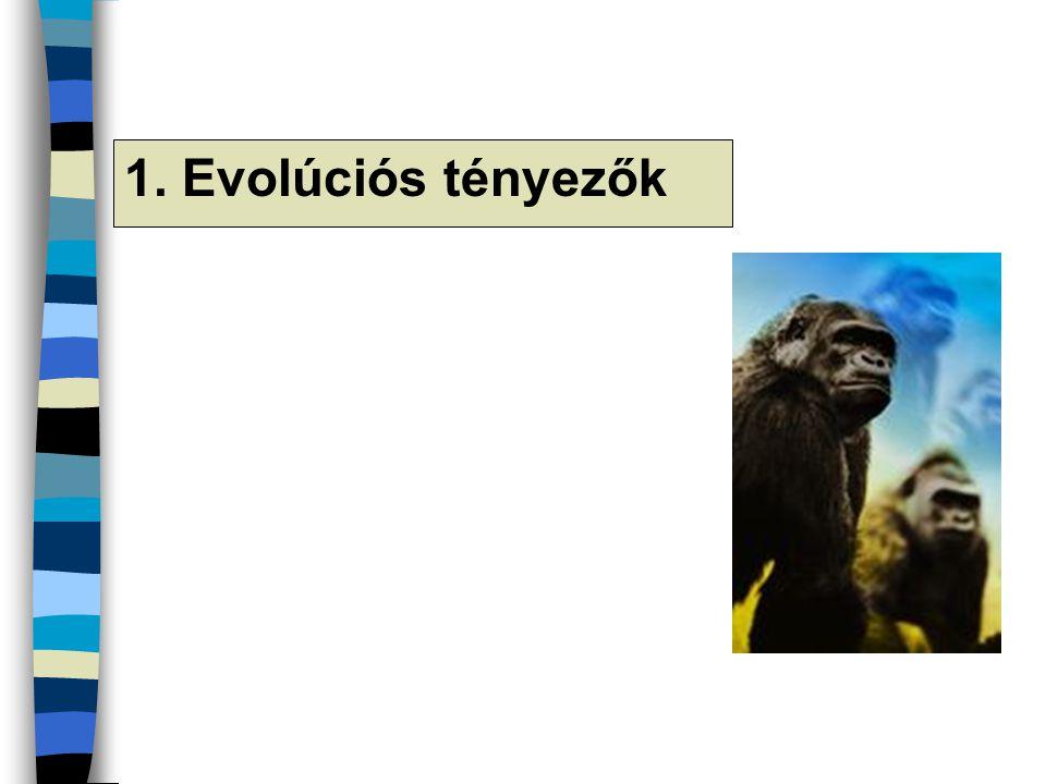 1. Evolúciós tényezők