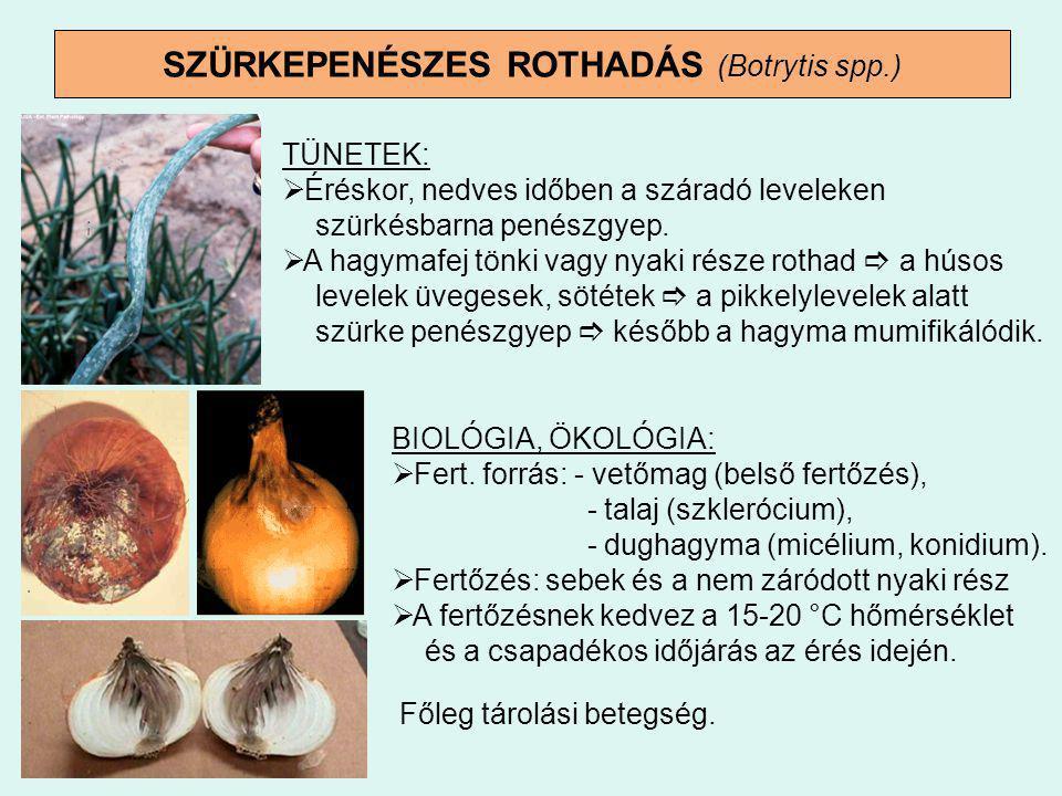 SZÜRKEPENÉSZES ROTHADÁS (Botrytis spp.) TÜNETEK:  Éréskor, nedves időben a száradó leveleken szürkésbarna penészgyep.  A hagymafej tönki vagy nyaki