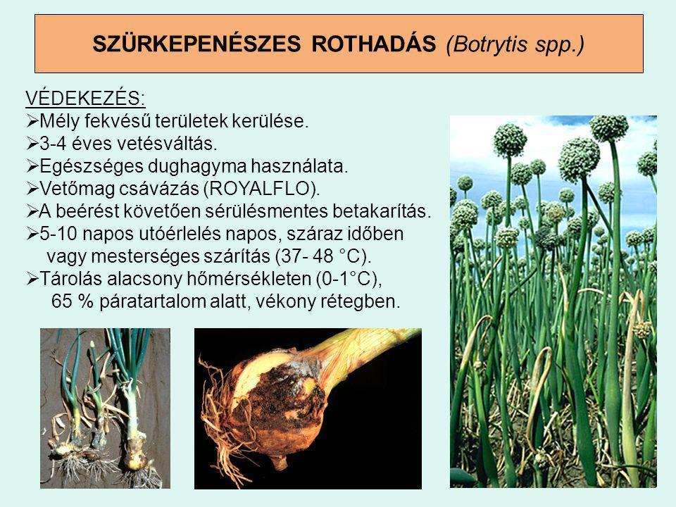 SZÜRKEPENÉSZES ROTHADÁS (Botrytis spp.) VÉDEKEZÉS:  Mély fekvésű területek kerülése.  3-4 éves vetésváltás.  Egészséges dughagyma használata.  Vet