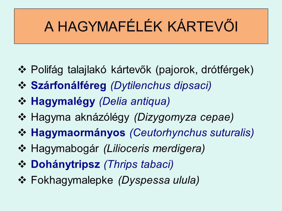 A HAGYMAFÉLÉK KÁRTEVŐI  Polifág talajlakó kártevők (pajorok, drótférgek)  Szárfonálféreg (Dytilenchus dipsaci)  Hagymalégy (Delia antiqua)  Hagyma
